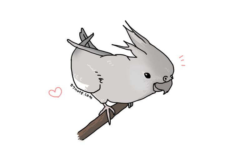 mocha_bird2