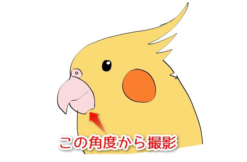 kuchibasi1