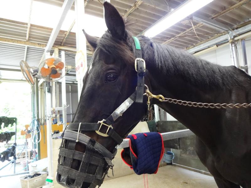 ショコラ(馬)