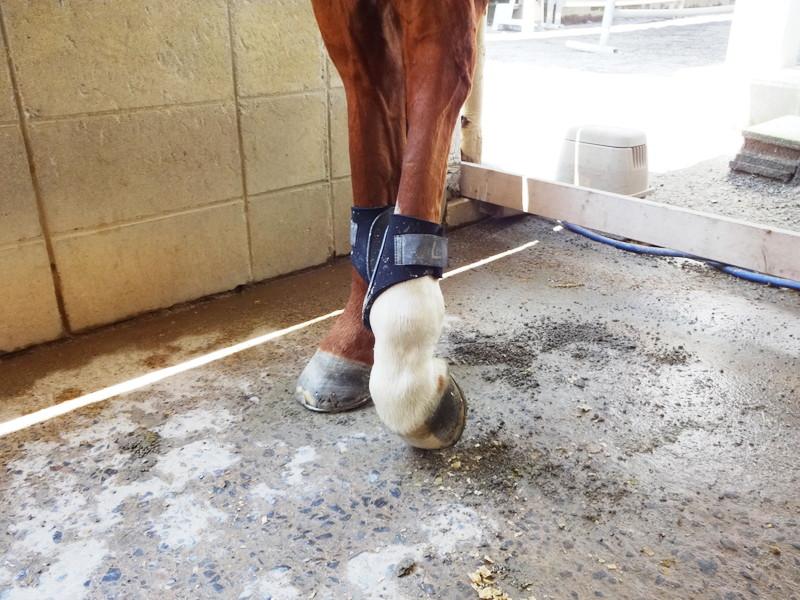 馬の後ろ足