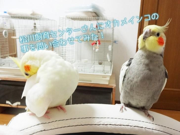 matsukawa-toiawase