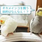 okame-mokuteki