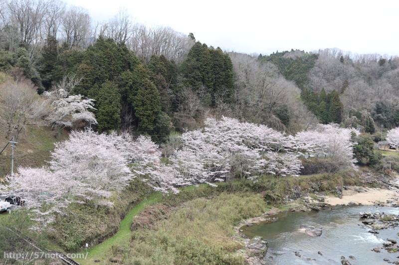 伊賀市 桜の名所
