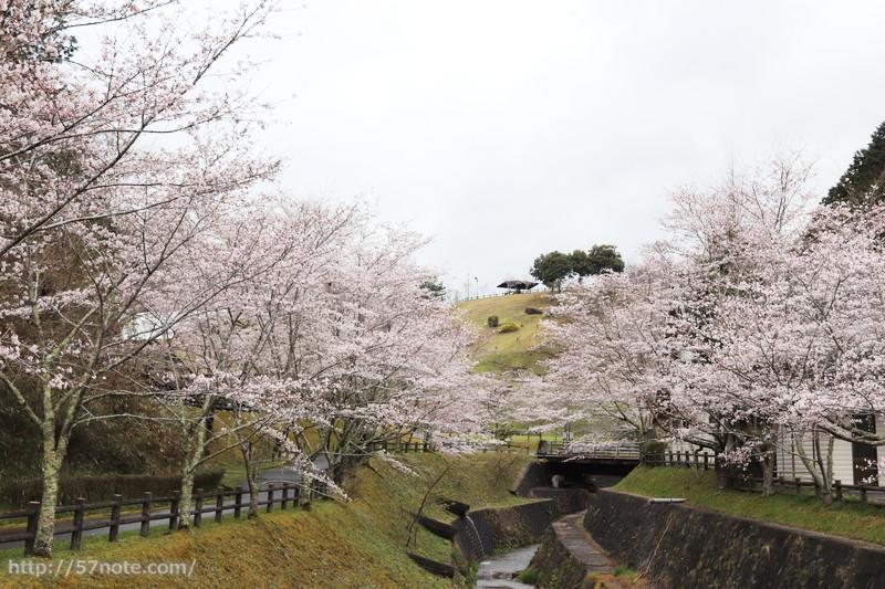 両脇に桜が満開!