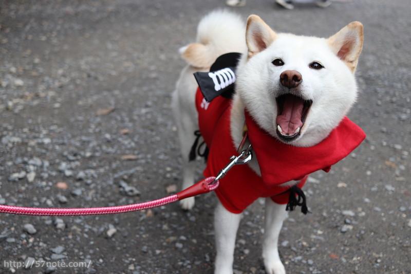 カワイイ忍者犬