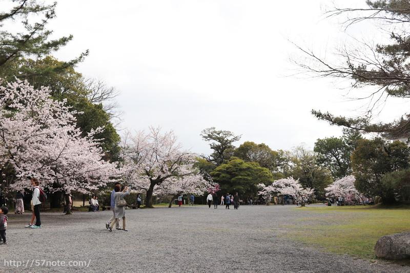 天守閣の桜