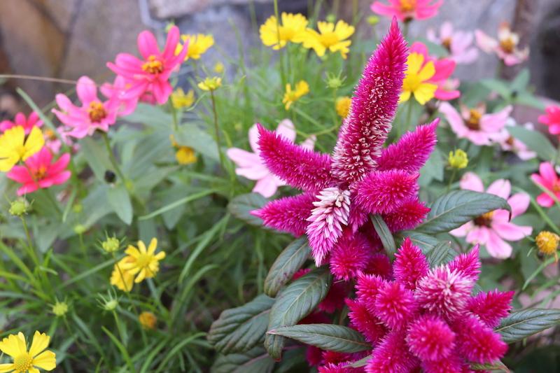 綺麗な花の植木がいたるところにあって癒されます